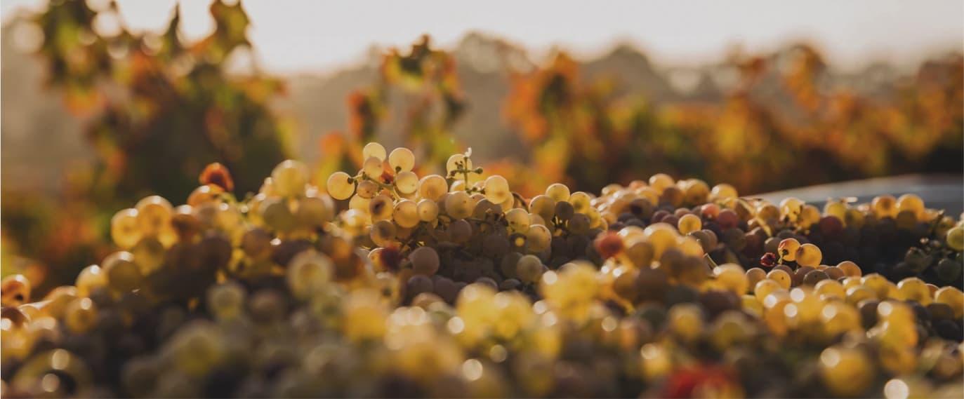 თელიანი - ამბავი ღვინის დაბადებისა