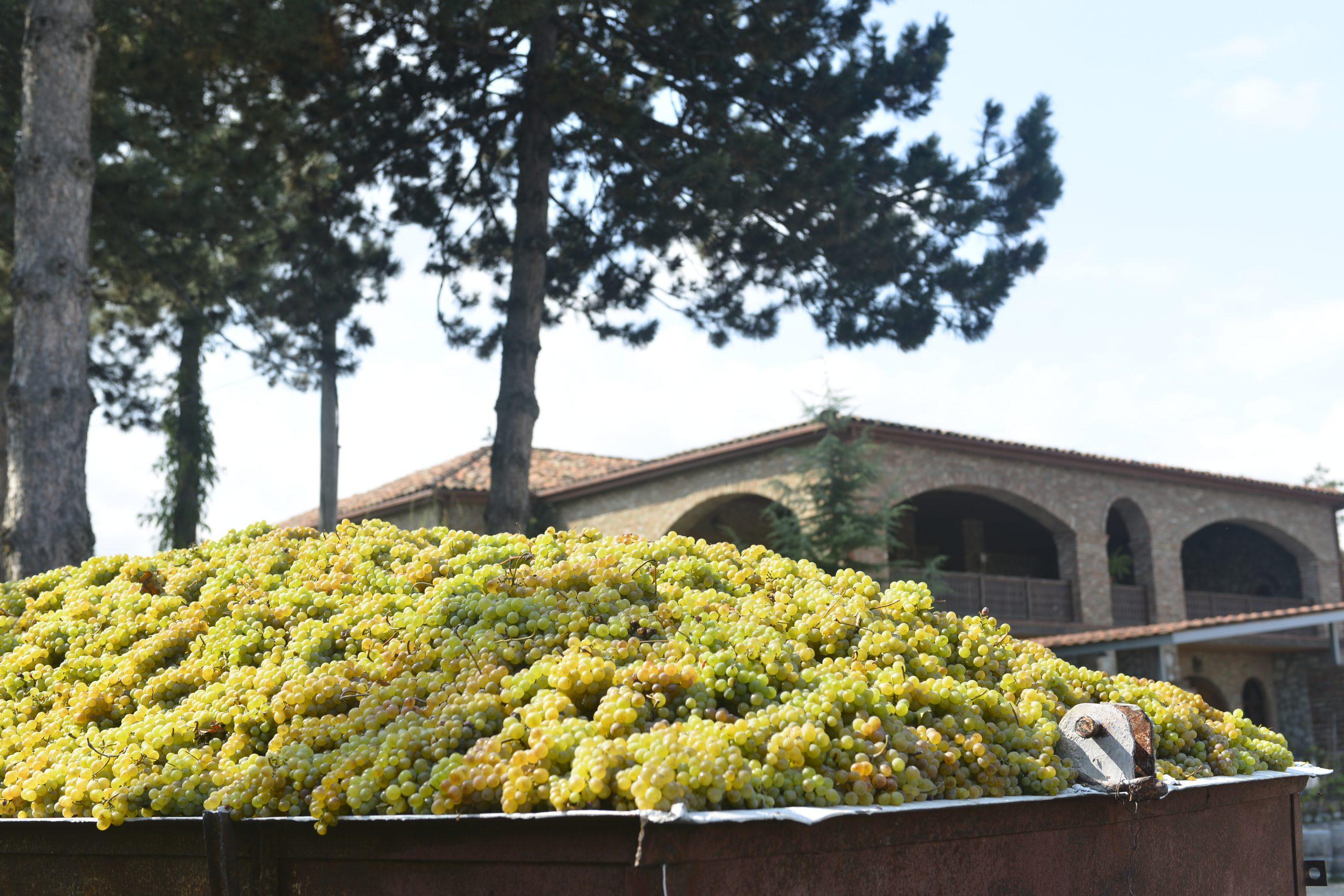 Teliani - the story behind the wine